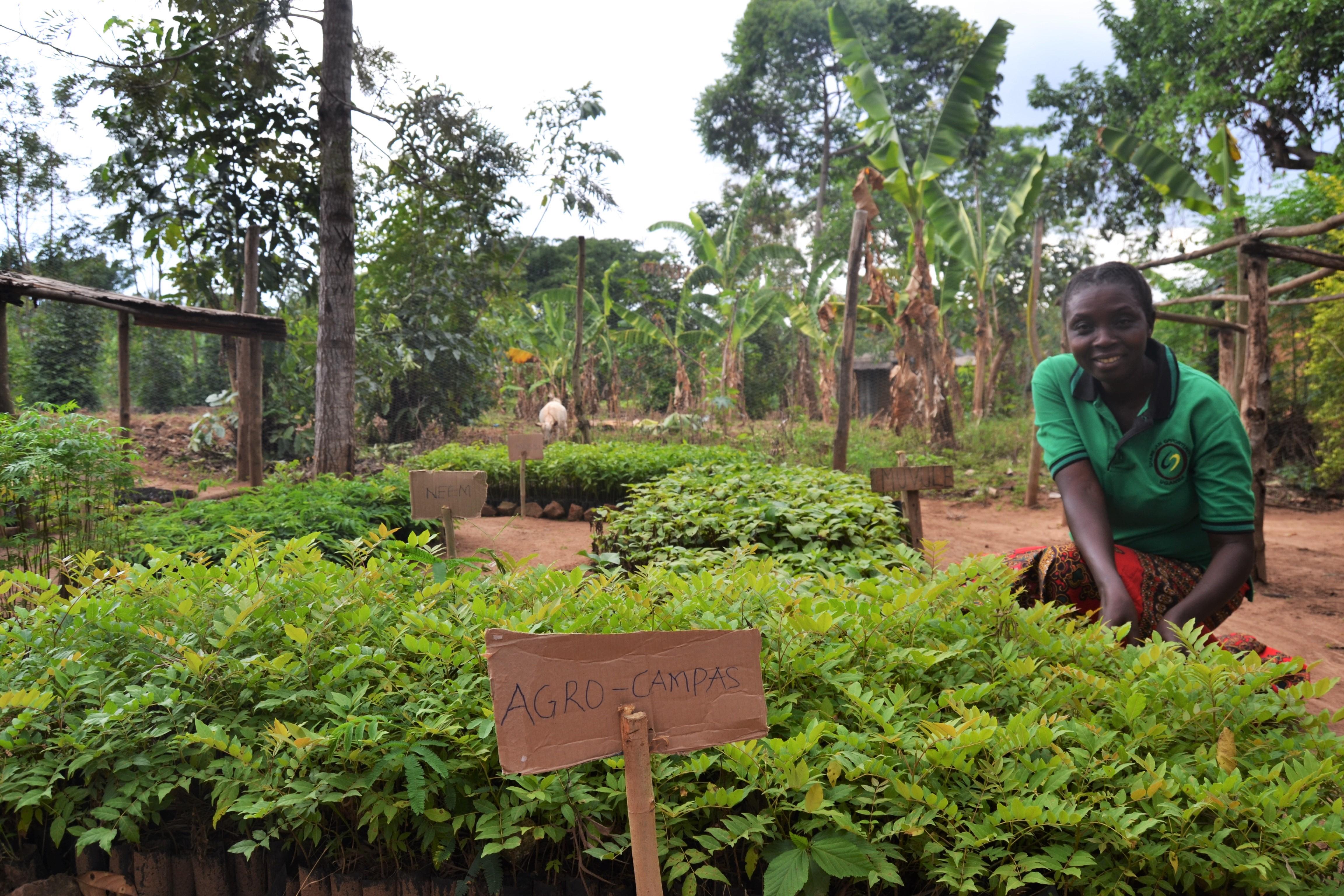 KIGAAGA SUSTAINABILITY SCHOOL SPEARHEADS TREE-PLANTING EFFORTS